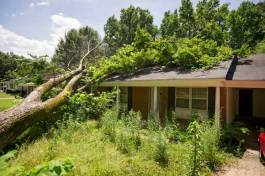 A tree lies across the roof of a vacant home in Frayser