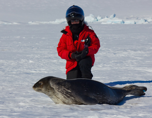 Alex Eilers and a Weddell seal pup at Turtle Rock, Antarctica