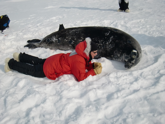Alex Eilers measures up to the seal near Scott Base, Antarctica