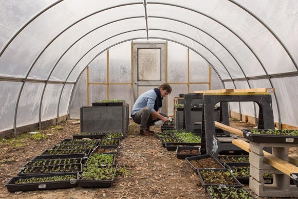 Roots Memphis Hoop House