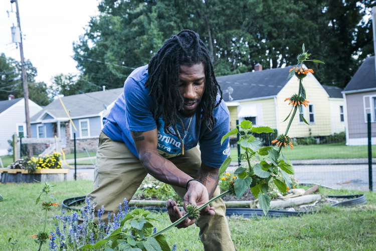 Malcolm Howze, 27, picks seeds from a Lions Tail plant at Mrs. Judy and Major's Coleman Street Garden in Mitchell Heights. (Natalie Eddings)