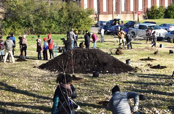 Volunteers work in groups to plant trees and clear walkways in the area that will become the park-like promenade in a Medical District vacant lot. (Cole Bradley)